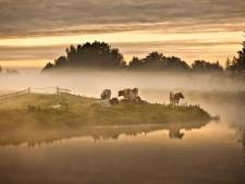 Wadden, Veluwe en Duinen mooiste natuur van Nederland