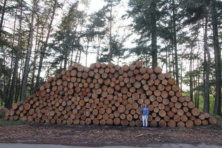 Bomenkap op landgoed bij Wapenveld. Beeld Watze de Vries