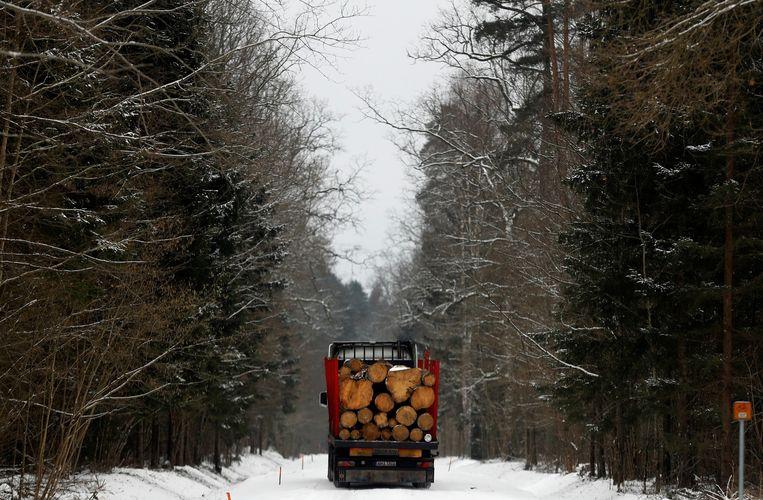 Opnieuw plannen voor houtkap in Pools bos van Bialowieza, het laatste oerbos van Europa - Volkskrant