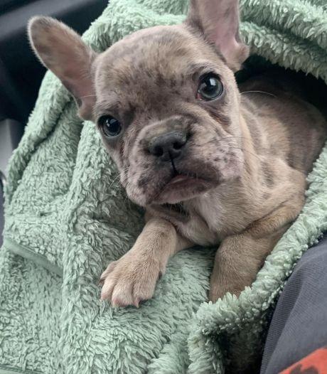 Beschuldigde fokker diep bedroefd na storm van kritiek: 'Dit was niet met opzet, ik hou van honden'