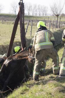 Brandweer bevrijdt paard uit sloot bij Sint-Maartensdijk