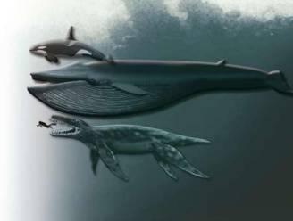 Prehistorische walvissen bleken geen vredelievende maar vleesetende roofdieren