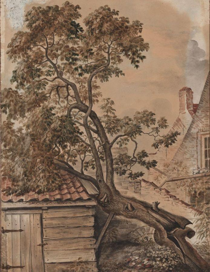 De moerbei van Slot Oostende in 1837.