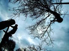 Tientallen bomen wijken voor rondweg Voorst