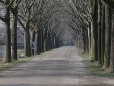 Mogelijk vreemde geur rond bomen in Someren