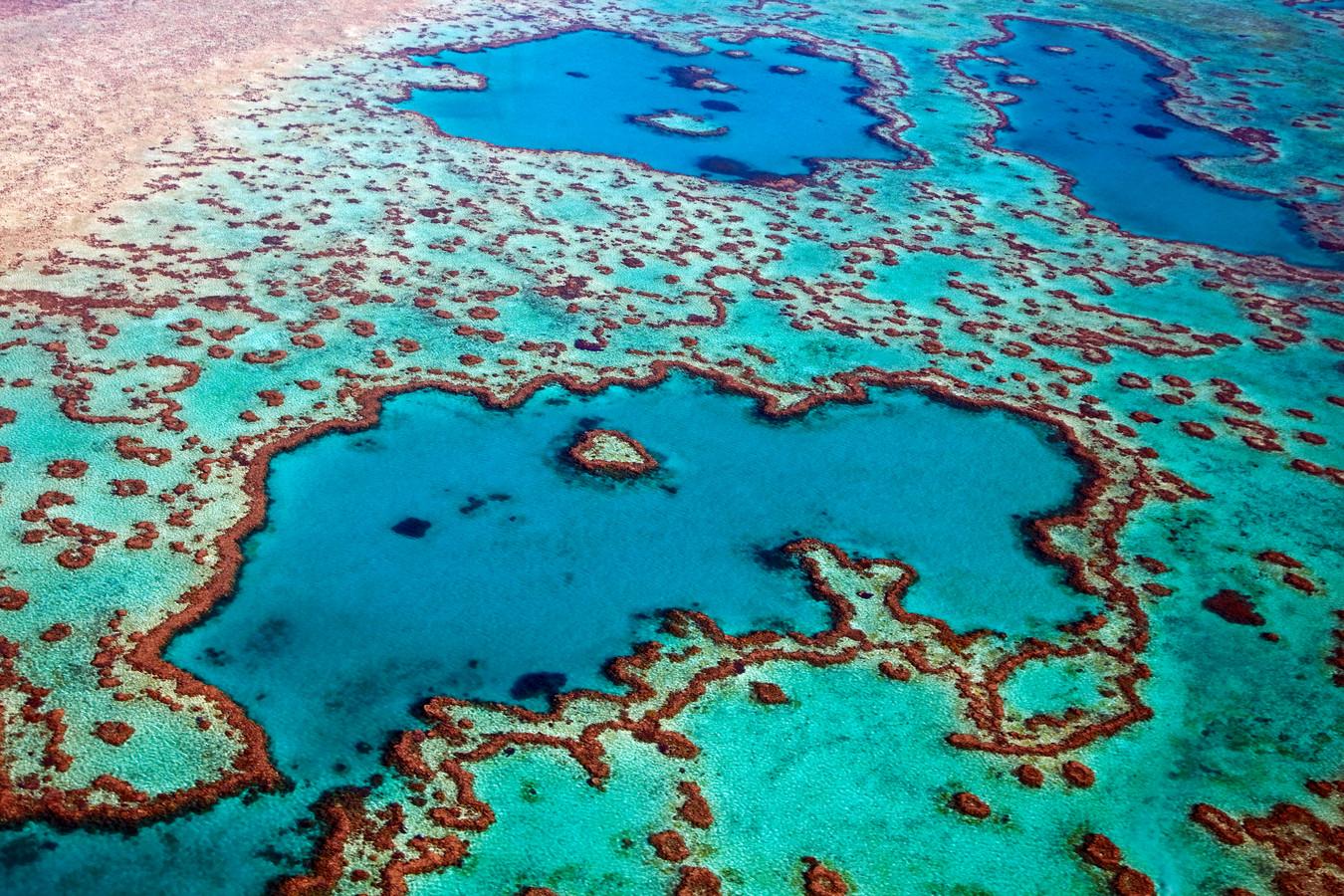 Een deel van het Great Barrier Reef.
