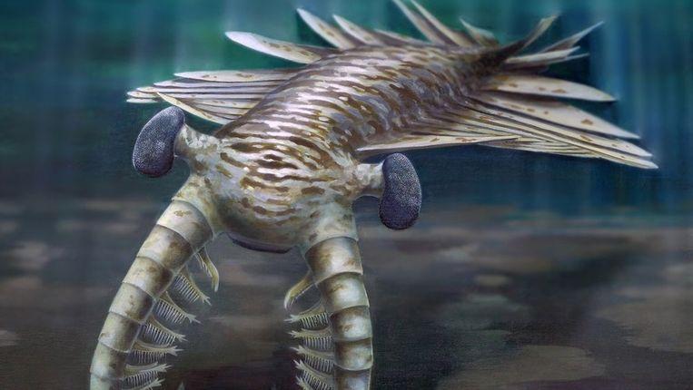 Texaanse biologiehandboeken worden gecontroleerd door experts die aanleunen bij het creationisme.