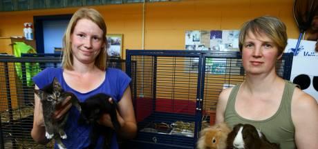 Schrikbarend veel coronahuisdieren worden teruggebracht bij het asiel: 'Topje van de ijsberg'