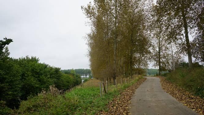 Volledige bomenrijen vroegtijdig in herfstmodus. Wat is er aan de hand?