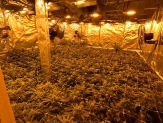 Drie jaar cel en 16.000 euro boete voor betrokkenheid bij cannabisplantage met 150 planten