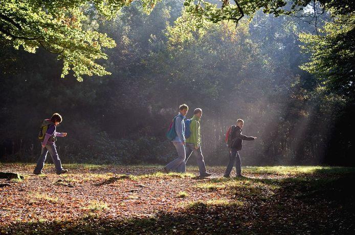 Wandelen in een bos in je eigen regio.