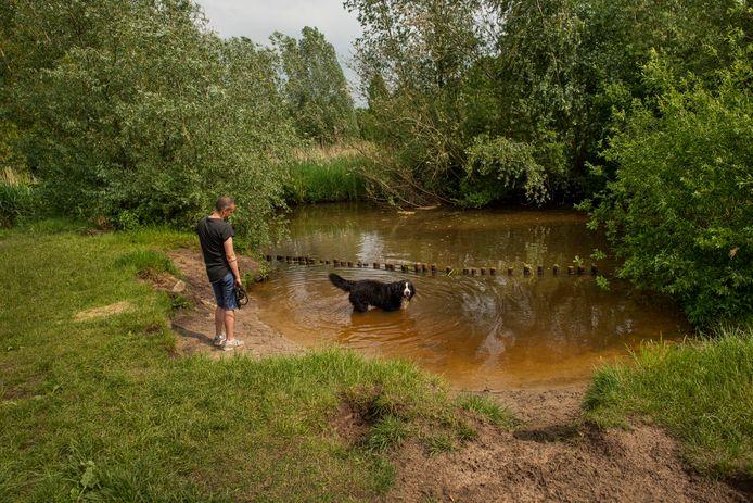 De hondenloslaatplaats in het Zaartpark blijft bestaan en wordt niet ingericht als zwemplek.