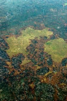 'Stukken Amazone-regenwoud illegaal te koop op Facebook'