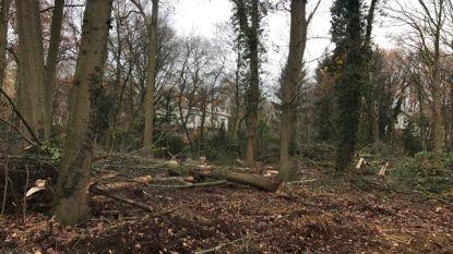 Buurtbewoners laten bomenkap Officierenwijk stilleggen