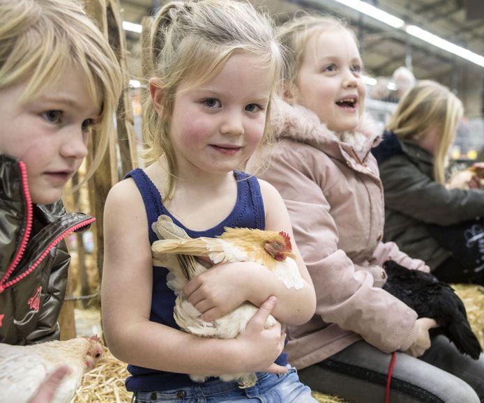 Lekker kroelen met aaibare kippen tijdens de Oneto in 2018.