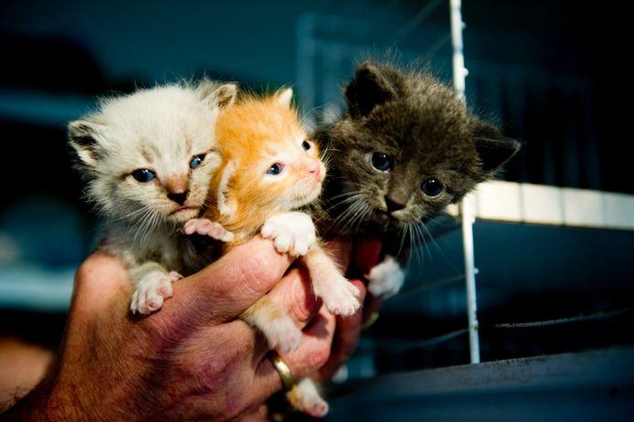 Foto is ter illustratie. Het gaat niet om deze katten.
