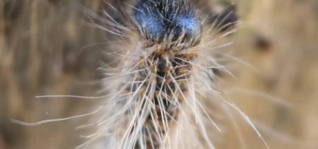 Succesvol rupsengif helpt ook vogels en vlinders om zeep