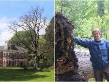De Haer in Oldenzaal neemt afscheid van bijzondere bomen: 'Oude dame knuffelde regelmatig met beuk'