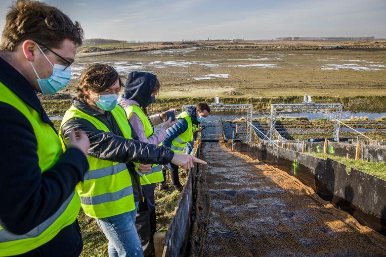 Studenten van de KU Leuven inspecteren de dijk in de Hedwige- en Prosperpolder. Beeld Arie Kievit