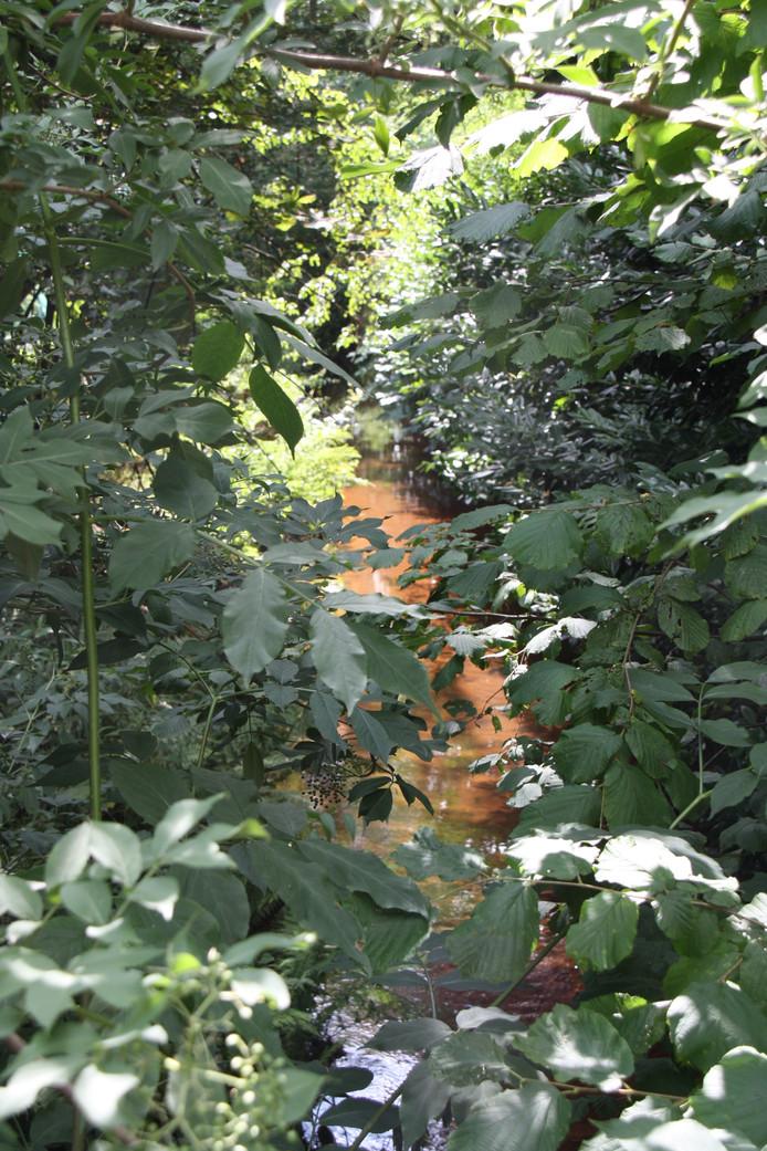 Veel meer dan een kabbelend beekje is het nog niet in het centrum van Peer, acht kilometer stroomafwaarts. Watertemperatuur: 13 ˚C.