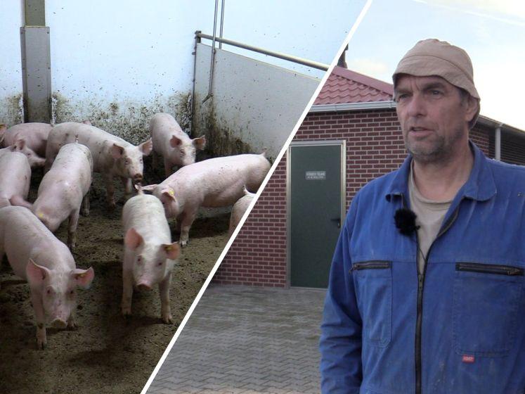 Arie is dol op zijn varkens: 'Er is zelfs vloerverwarming'