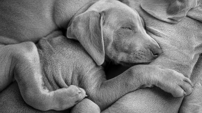 'Cuddle pups'. Tweede plaats Vincent van Gogh Photo Award.