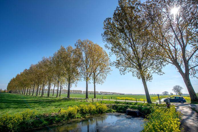 Bomen zijn belangrijk bij het opvangen van koolstofdioxide (C02).