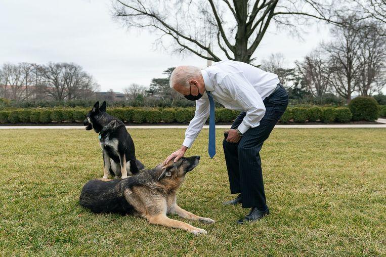 President Joe Biden begroet zijn honden Champ en Major in de rozentuin van het Witte Huis. Beeld Photo News
