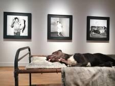 Wat doet die opgezette hond in het Fotomuseum?