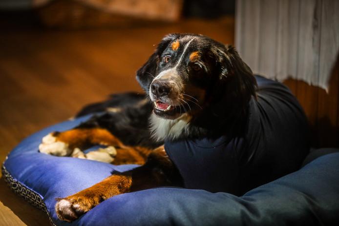 De eigenaars van de hond, Petra Bauwens en Philip Van Dingenen zijn op zoek naar de vrouw die bij hun hond bleef toen die werd aangereden.