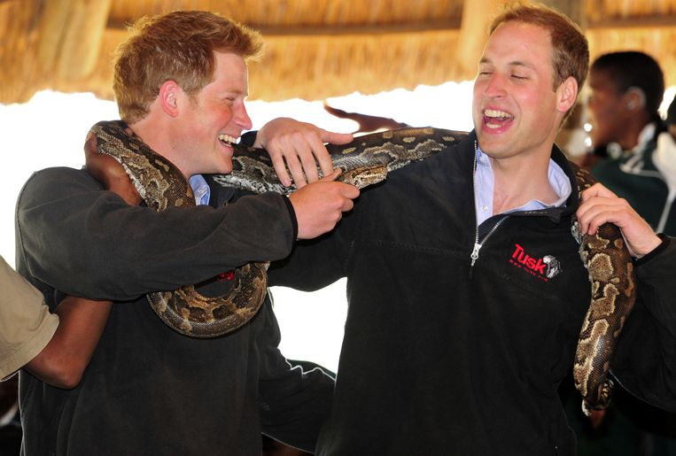 Harry en William dollen met een python in Botswana, 2010.  Beeld AP