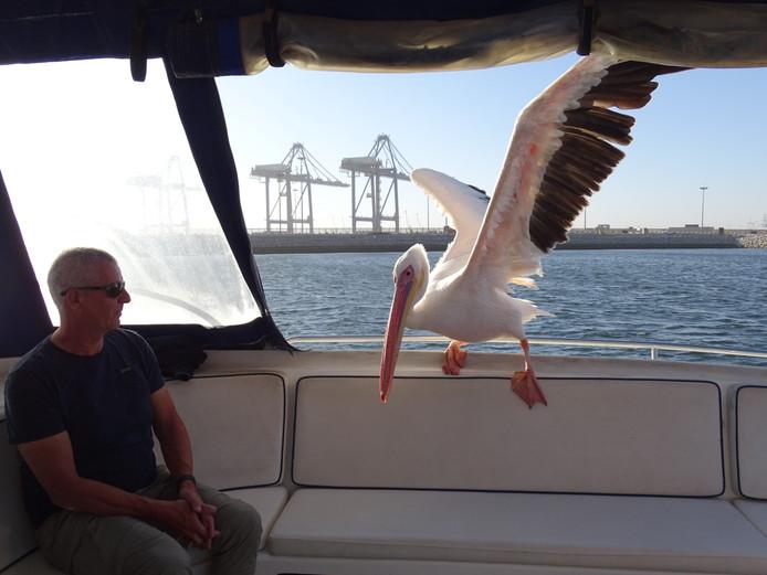 Dolfijnen spotten in Namibië leverde nog iets anders op voor Yvonne en haar man Peter. Opeens streek er een reusachtige pelikaan neer op de boot.