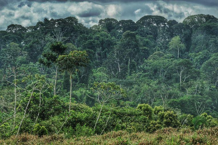 Het Amazonegebied. Beeld RV