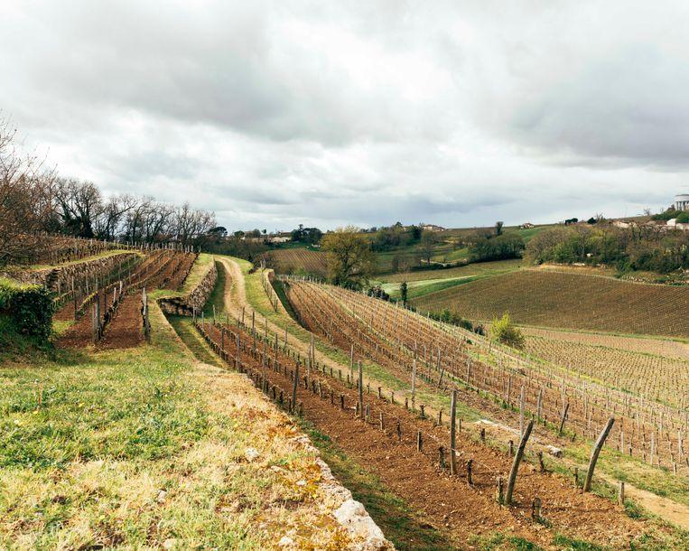 Rond Bordeaux worden steeds vaker kleine wijndomeinen opgekocht door rijke Aziaten.  Beeld Rebecca Fertinel