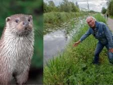 Natuurkenner Gerard (72) is er nog steeds beduusd van: na 60 jaar is de otter terug in Kockengen