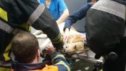 "Twee honden in illegale vossenklem in één week: ""Meld alle verdachte zaken meteen"""