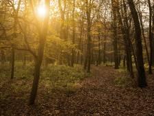 Waalre wil voedselbos, waar voedsel wordt geoogst tussen de struiken en bomen