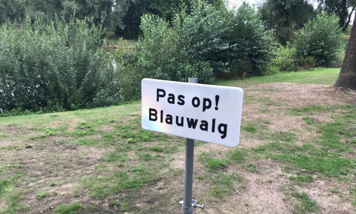 Het waterschap waarschuwt voor blauwalg in Zwartsluis en Genemuiden.