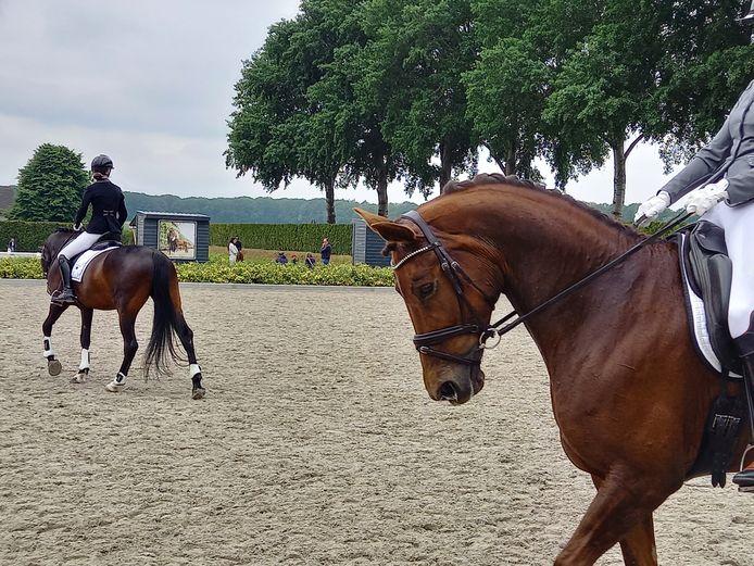 De Nijmeegse paardrijvereniging Keizerstad heeft een Meet en Weet oefenmoment gehouden op de manege van Klein Amerika in Groesbeek.