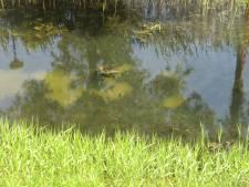 Gifcocktail in grondwater Ede-Zuid: opruimen gaat nog honderd jaar duren