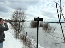 Hoogwater, ijs en sneeuw levensgevaarlijke combi voor ree in uiterwaarden: 'Jaag de dieren niet op'