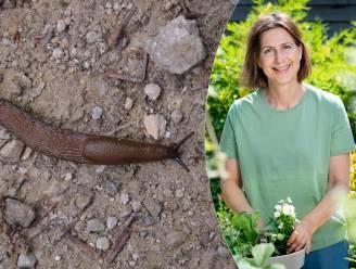 """""""Gooi slakken niet bij de buren, ze kruipen instinctief terug naar hun thuisbasis"""": tuinexperte legt uit hoe je slakken bestrijdt"""