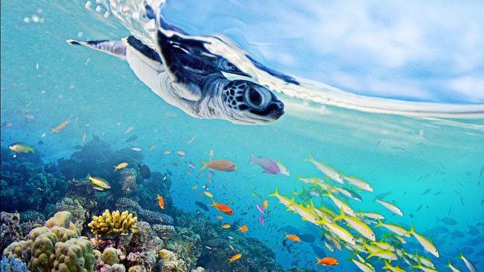 Great Barrier Reef: A Living Treasure is vanavond om 21.00 uur te zien op National Geographic.