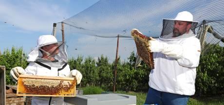 Overdag een Zoommeeting, 's avonds naar de zoemers: 'Bijenhouden is een hobby die nooit verveelt'