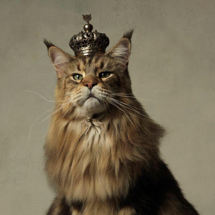 De bijzondere kattenfoto's van Marie Cécile Thijs, zoals His Majesty 2011, maken onderdeel uit van de familietentoonstelling over kattenliefde.