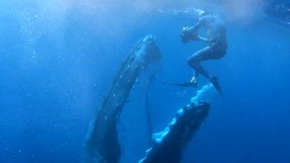 Unieke ontmoeting tussen duiker en enorme walvis