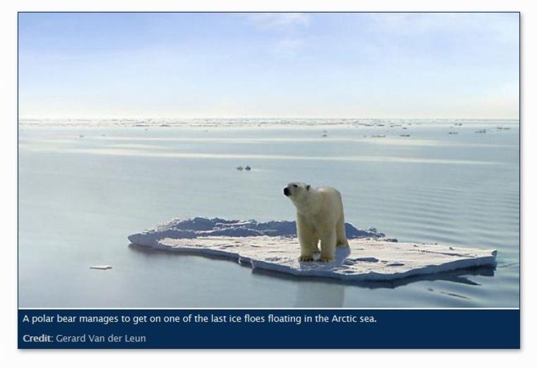Op de site van ngo Richard Sandbook Trust krijgt Bogus als onderschrift:'Een ijsbeer is erin geslaagd om op een van de laatste ijsschotsen in de poolzee te komen'. Beeld Richard Sandbook Trust