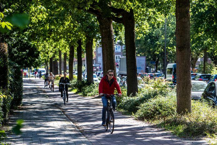 Een rij eiken langs de Margijnenenk. Hier gaan wél bomen om, die moeten plaatsmaken voor een nieuw en breder fietspad.