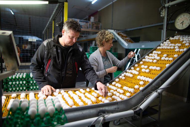 Mark en Liset Grootentraast tijdens het sorteren van de eieren. De loods stond tijdens de fipronilcrisis tot de nok vol met besmette eieren. Beeld Herman Engbers