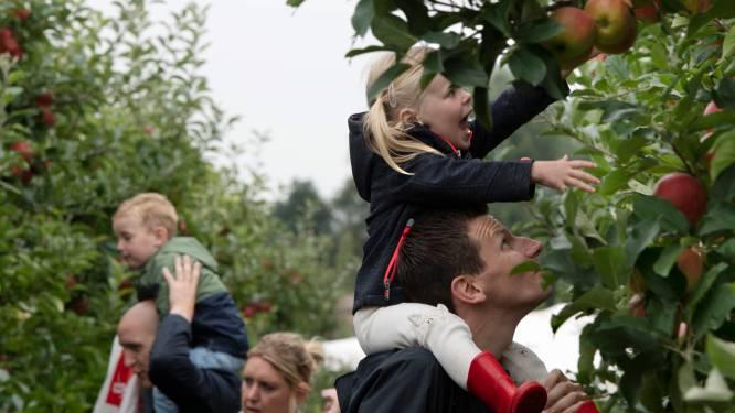 Plukdag bij teler Bert trekt veel bezoekers: 'Kinderen zien voor het eerst waar hun appel vandaan komt'